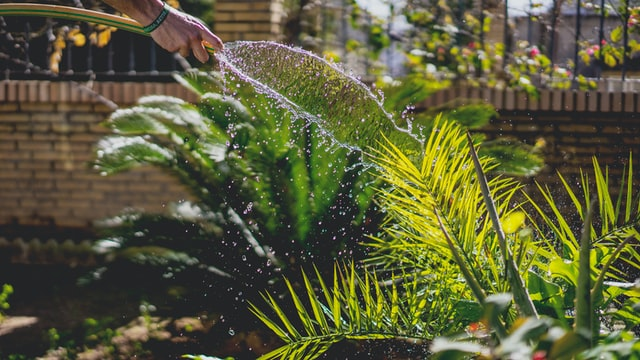 多肉植物水やり道具 多肉植物 塊根植物 水やり 道具 アガベ